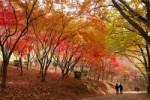 織姫公園 もみじ谷