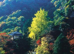 行道山浄因寺