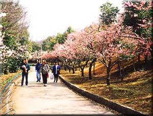 桐生南公園