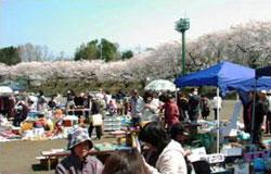 新里桜まつり(新里こどもフェスタ)