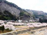 黒保根運動公園の桜