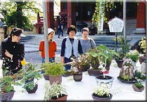 関東山野草展