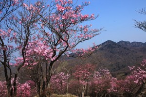 袈裟丸山(アカヤシオ)